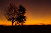 Winter Sunset on an Estancia in Uruguay. - Paul Mattsson - 1980s,1983,america,american,americans,Americas,Colourful,EBF economy business,ENI environmental issues,farm,farmed,Farming,Grasslands,hemisphere,Landscape,LANDSCAPES,Latin America,Livestock,outdoors,o