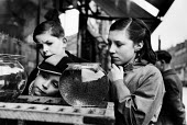 Children looking at a frog spawn in a bowl on a pet stall in a London street market in 1952. .... - Elizabeth Chat - 1950s,1952,amphibian,amphibians,animal,animal animals,animals,bought,bowl,boy boys,buy,buyer,buyers,buying,CHILD,child children,CHILDHOOD,Children,commodities,commodity,consumer,consumers,customer,cus