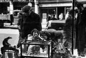 People looking in a pet shop window on Parkway in Camden Town, London at goldfish in a tank. in 1952. .... - Elizabeth Chat - 1950s,1952,adult,adults,animal animals,bought,buy,buyer,buyers,buying,child children,commodities,commodity,consumer,consumers,customer,customers,domestic pet,families,FAMILY,female,females,fish,fish f