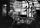 Man looking at caged birds in a pet shop in London in 1952. .... - Elizabeth Chat - 1950s,1952,animal animals,bars,bird,bird birds,birds,birds bird,bought,buy,buyer,buyers,buying,cage cages,commodities,commodity,consumer,consumers,customer,customers,domestic pet,goods,high,hobbies,ho