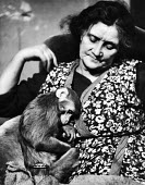 Woman in her home with her pet monkey resting on her lap in 1952. .... - Elizabeth Chat - ,1950s,1952,animal,animals,asleep,cities,city,domestic,EXHAUSTED,EXHAUSTION,FEMALE,hobbies,hobby,hobbyist,home,interest,Leisure,LFL,LIFE,London,monkey,owner,owners,OWNERSHIP,PEOPLE,person,persons,pet,