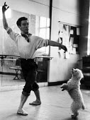 Dancer practises his ballet steps in a dance studio in 1952 whilst his pet dog attempts to copy him. .... - Elizabeth Chat - ,1950s,1952,ACE,animal,animals,ballet,canine,cities,city,culture,dance,dancer,dancers,dancing,dog,dogs,domestic,hobbies,hobby,hobbyist,Leisure,LFL,LIFE,London,male,man,melody,men,music,MUSICAL,owner,o