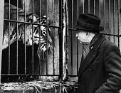 Man in close proximity to tiger housed in a very small cage in 1952. .... - Elizabeth Chat - 11-07-1952