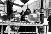 Children looking at a frog spawn in a bowl on a pet stall in a London street market in 1952. .... - Elizabeth Chat - 1950s,1952,amphibian,amphibians,animal,animal animals,animals,bought,bowl,boy boys,buy,buyer,buyers,buying,CHILD,CHILDHOOD,Children,commodities,commodity,consumer,consumers,customer,customers,domestic