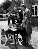 Women from a family smallholding pack freshly picked asparagus from their fields in readiness for delivery to market, Evesham, Worcestershire 1947 - Felix H. Man - 1940s,1947,agricultural,agriculture,animal,animals,asparagus,canine,capitalism,capitalist,crop,crops,DELIVERING,delivery,dog,dogs,EBF,Economic,Economy,employee,employees,Employment,families,family,FAR