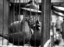 Belgian writer, Georges Simenon, in Paris, 1947. - Inge Morath - 1940s,1947,ACE,arts,author,authors,Belgian,bird,birds,cafe,cafes,catering,cities,city,culture,eu,Europe,european,europeans,eurozone,Fiction,france,french,Georges,Jules Maigret,male,man,men,Paris,peopl