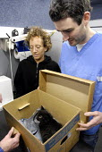 A kitten arriving for treatment at a mobile veterinary clinic run by the Victoria Animal Hospital in Hackney, East London. The clinic helps those on low income as the treatment is provided for free or... - Rogan Macdonald - 2000s,2007,animal,Animal Welfare,animals,ARRIVAL,arrivals,arrive,arrived,arrives,arriving,Blue,box,boxes,cardboard box,cat,cats,charitable,charities,charity,cities,city,clinic,clinics,Cross,Domestic,E