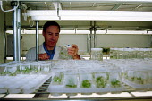 Scientist examining samples in the tissue and culture laboratory of the Horticultural Research Institute in East Malling in Kent - Stefano Cagnoni - 17-07-2002