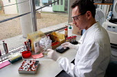 NHS staff examining blood and tissue samples in the Pathology Laboratory of a hospital - Stefano Cagnoni - 2000s,2005,analysing,analysis,analyzing,and,biochemistry,care,coat,CONCENTRATE,concentrating,concentration,Diagnostic,examination,examining,Eye Protection,gloves,HEA health,health,HEALTH SERVICES,heal