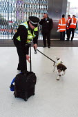 Police sniffer dog inspecting luggage for his handler on the concourse of an underground station - Stefano Cagnoni - ,2000s,2006,adult,adults,animal,animals,bag,bags,beat,bomb,bombs,canine,CLJ crime law,concourse,detect,detecting,dog,dogs,explosive,explosives,force,handler,handlers,incident,incidents,inspect,left,lu