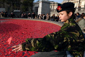 Young Cadet from the 157 Royal Artillery Company throws poppy petals into the fountains at Trafalgar Square following a two minutes silence in memory of all those whose lives have been lost through wa... - Stefano Cagnoni - 11-11-2006