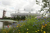 Flowers and shrubs especially planted in the Olympic Park in Stratford for the London2012 Olympic Games, with The Orbit art installation and the Olympic Stadium visible beyond them. The planting was d... - Stefano Cagnoni - 28-07-2012