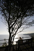 Old woman looking out to sea beneath a windswept tree in the early morning autumn sun, Scarborough, 2014. - Stefano Cagnoni - 09-10-2014