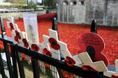 Armistice Day on the 100th Anniversary of the year in which the First World War began. Poppies and crosses are laid by the public to remember the war dead on the gates of the Tower of London; all arou... - Stefano Cagnoni - &, WW2,1st,2010s,2014,ACE,Anniversary,Armistice,art,artwork,artworks,belief,Blood Swept Lands and Seas of Red,by,castle,christian,christianity,cities,city,COLOR,colorful,colorfull,colors,colour,colour