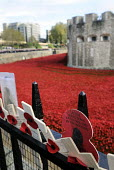 Armistice Day on the 100th Anniversary of the year in which the First World War began. Poppies and crosses are laid by the public to remember the war dead on the gates of the Tower of London; all arou... - Stefano Cagnoni - 11-11-2014