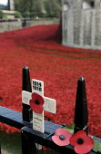 Armistice Day on the 100th Anniversary of the year in which the First World War began. Poppies and crosses are laid by the public to remember the war dead on the gates of the Tower of London; all arou... - Stefano Cagnoni - &, WW2,1st,2010s,2014,ACE,Anniversary,Armistice,art,artwork,artworks,belief,Blood Swept Lands and Seas of Red,by,castle,centenary,christian,christianity,cities,city,COLOR,colorful,colorfull,colors,col