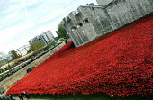 Armistice Day on the 100th Anniversary of the year in which the First World War began. The Tower of London moat displays the 888,246 ceramic poppies, the completed art installation by Paul Cummins, re... - Stefano Cagnoni - WW2,1st,2010s,2014,ACE,Anniversary,Armistice,art,artwork,artworks,Blood Swept Lands and Seas of Red,by,castle,cities,city,COLOR,colorful,colorfull,colors,colour,colourful,colours,COMMEMORATE,COMMEMORA