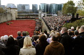 Two Minute Silence to remember the war dead on Armistice Day on the 100th Anniversary of the year in which the First World War began. In the moat at the Tower of London lie 888,246 ceramic poppies, th... - Stefano Cagnoni - 11-11-2014