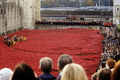 Two Minute Silence to remember the war dead on Armistice Day on the 100th Anniversary of the year in which the First World War began. In the moat at the Tower of London lie 888,246 ceramic poppies, th... - Stefano Cagnoni - WW2,1st,2010s,2014,ACE,Anniversary,Armistice,art,artwork,artworks,Blood Swept Lands and Seas of Red,by,castle,centenary,cities,city,COLOR,colorful,colorfull,colors,colour,colourful,colours,COMMEMORATE