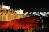 Visitors look on at the art installation, floodlit at night, by Paul Cummins in the moat at the Tower of London to commemorate one hundred years since the start of the First World War. 888,246 ceramic... - Stefano Cagnoni - 12-11-2014