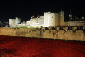 Art installation, floodlit at night, by Paul Cummins in the moat at the Tower of London to commemorate one hundred years since the start of the First World War. 888,246 ceramic poppies, each represent... - Stefano Cagnoni - WW2,1st,2010s,2014,ACE,Armistice,art,artwork,artworks,at,Blood Swept Lands and Seas of Red,by,castle,centenary,cities,city,COLOR,colorful,colorfull,colors,colour,colourful,colours,COMMEMORATE,COMMEMOR