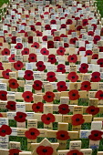 Wooden crosses with poppies commemorating the dead of World War One, planted in the Royal Legion Field of Remembrance, Westminster, 2015. - Stefano Cagnoni - WW2,2010s,2015,ACE,COLOR,colorful,colorfull,colors,colour,colourful,colours,COMMEMORATE,COMMEMORATING,commemoration,COMMEMORATIONS,cross,crucifix,crucifixes,Culture,dead,London,memorial,name,names,pop