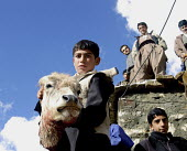 An Iranian kurdish boy shows a cow's head after slaughter during a marriage ceremony of Pir-e-Shahyar in Uraman Takht village. this village is center of Uramanat located in South Eastern Marivan, Iran - Siavash Habibollahi - 03-02-2005
