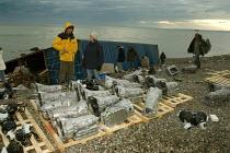 MSC Napoli wrecked off the Devon Coast, Branscombe - Sam Morgan Moore - 2000s,2007,aground,AUTO,AUTOMOBILE,AUTOMOBILES,AUTOMOTIVE,Bay,beach,Beachcomber,Beachcombers,Beachcombing,beached,BEACHES,boat,boats,car,cargo,CARS,coast,coastal,coasts,container,containers,damage,dam