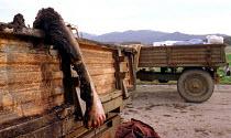 Albanian refugees killed by NATO air attack near Djakovica, Kosovo. 1999 - Andrija Ilic - 01-07-1999