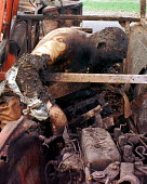 Kosovar Albanian refugees killed by NATO air attack near Djakovica, Kosovo. 1999 - Andrija Ilic - ,1990s,1999,Albanian,Albanians,attack,attacking,Balkan,balkans,BOMB,bombing,bombings,BOMBS,conflict,conflicts,crimes,dead,dead body,death,DEATHS,Diaspora,died,displaced,europe,foreign,foreigner,foreig