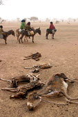 Sudanese refugees pass dead cattle while fleeing attacks by Government supported forces in the Darfur region to go to UNHCR camps in Eastern Chad. 2004 - Boris Heger - 2000s,2004,africa,agricultural,agriculture,aid agency,ANIMAL,animals,assistance,BAME,BAMEs,BME,bmes,camp,camps,cattle,chad,Chadian,Climate Change,conflict,conflicts,Darfur,Darfuris,dead,degradation,de