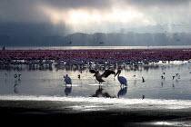 Stork and flamingos at Lake Nakuru National Park, Kenya 2004 - Boris Heger - 01-09-2004