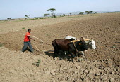 A farmer ploughs his field in rural Somalia. 2005 - Boris Heger - 2000s,2005,africa,african,Africans,developing,east,EBF,Economic,Economy,employee,employees,Employment,FARM,farm worker,farm workers,farmed,farmhand,farmhands,farming,farmworker,farmworkers,job,jobs,LA