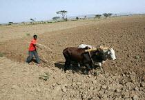 A farmer ploughs his field in rural Somalia. 2005 - Boris Heger - 06-09-2005