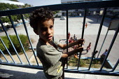 A Palestinian child at his new home, a school in Jabalya refugee camp in the Gaza Strip after they were forced by the Israeli military from their homes. Over the last two weeks over 500 Palestinian pe... - Thomas Morley - 29-07-2006