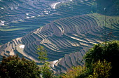 Terraced paddy fields in Himalayas. Baglung district, Nepal. - Howard Davies - 03-05-1997