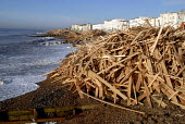 Thousands of tons of timber washed ashore on Worthing beach following the sinking of the cargo ship Ice Prince during a winter storm. The wood is being salvaged by contractors. Sussex, UK 2008 - Howard Davies - 22-01-2008
