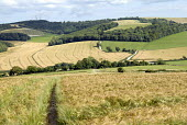 View of Barley fields and Burton Down on the South Downs, UK - Howard Davies - 20-07-2008
