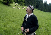 Traditional shepherd herding his flock of sheep in the foothills of the Tatra Mountains, Poland 2008 - Howard Davies - 11-06-2008