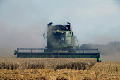 Combine harvester harvesting a corn field on a farm in West Sussex, UK 2009 - Howard Davies - 09-08-2009