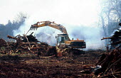 Destruction of ancient woodland during anti roads protests against the Newbury bypass 1997 - Howard Davies - 01-08-1997