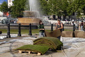 Contractors lifting the grass lawn which had been placed for two days over Trafalgar Square to promote green spaces in London in Spring 2007. UK - Howard Davies - 26-05-2007