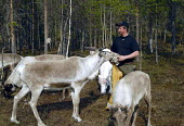 A Sami reindeer herder with his reindeer in northern Sweden. The Sami are the indigenous people of Sapmi whose ancestral land spans four countries across northern Europe. 2006 - Howard Davies - 2000s,2006,AGRICULTURAL,agriculture,ancestral,animal,animals,BME minority ethnic,capitalism,capitalist,EBF Economy,eu,Europe,european,europeans,farm,farm worker,farm workers,farmed,FARMER,farmers,farm