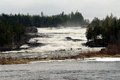 The Storforsen rapids on one of the major Swedish rivers with the largest drop of any rapids in the Nordic countries. Sweden 2006 - Howard Davies - 25-04-2006