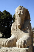 An Alabaster Sphinx in the ruins of Memphis, once the ancient capital of the Old Kingdom of Egypt, now outside Cairo, Egypt. 2006 - Howard Davies - 07-11-2006