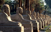 View of the Avenue of Sphinxes, on the causeway to the Luxor Temple. - Howard Davies - 14-10-2005