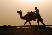 Camel herder taking camels to market in desert outside Riyadh, Saudi Arabia 2006 - Howard Davies - 30-09-2006