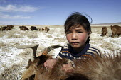 Kazakh girl looking after a herd of Yak. Naranbulag Soum in Uvs Aimag, western Mongolia. - 2000s,2007,adolescence,adolescent,adolescents,aimag,animal,animals,Asia,asians,Aymag,Bayan,BME minority ethnic,Bos,child,Child Labor,child labour,CHILDHOOD,children,cold,desert,Diaspora,EBF economy,em