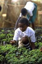 Children manage school gardens and tree nursery. Uganda. 1998 - Jim Holmes - 03-07-1998