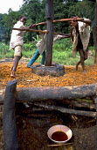 Community pressing palm oil from palm nuts at Mbarara. Uganda. 1997 - Jim Holmes - 03-07-1997